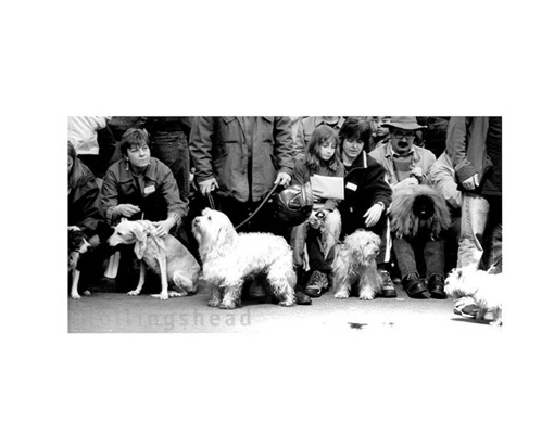 April 2001 Contestants in Spitalfields Dog Show